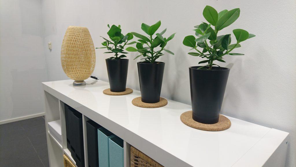 Uusia tuulia: toimiston sisustuksessa on käytetty viherkasveja ja korkkia