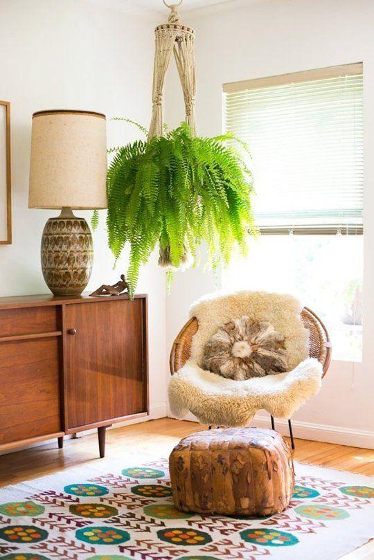 Viherkasvit: Saniainen viihtyy hyvin myös sisätiloissa.