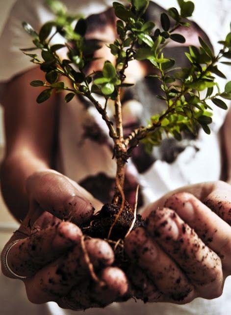 Kuka tahansa voi nauttia kasvien hoitamisesta, tärkeää on löytää itselle omiin mieltymiksiin soveltuva laji.