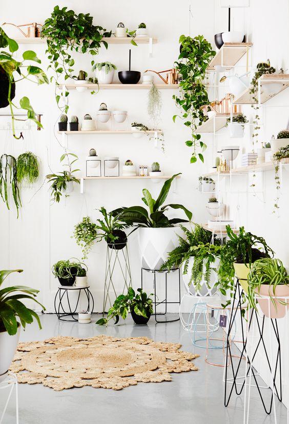 Viherkasveja saa olla runsaasti ympäri kotia!